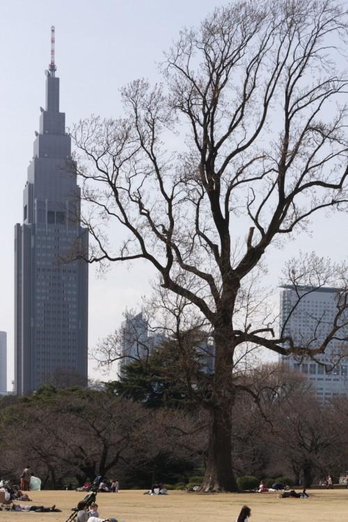 自然と新宿高層ビル